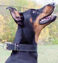 Padded Leather Dog Collar for Doberman, Strong and Soft