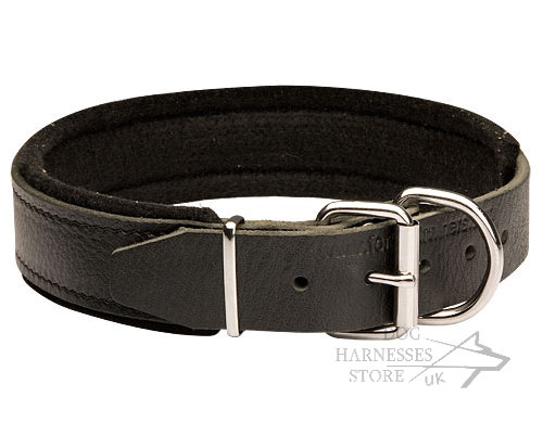 Padded Dog Collars UK