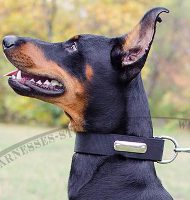 Nylon Dog Collar Name Plate