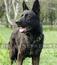 GSD Harness