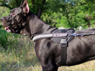 Reflective Dog Harness for Great Dane, Nylon with ID Patches