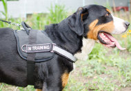 Reflective Dog Harness for Swiss Mountain Dog Walking & Training
