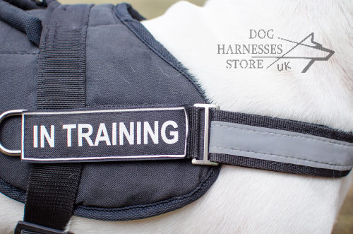 Harness for Bull Terrier
