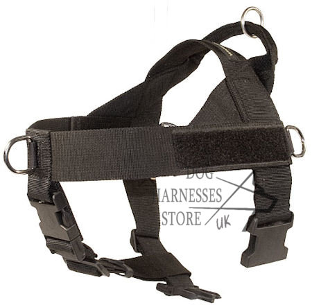 Dog Harness UK