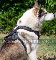 Protection Dog Harness for West Siberian Laika Safety