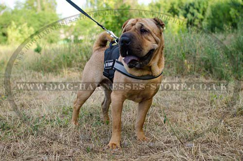 Shar Pei Tracking Harness
