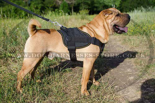 Shar Pei Harness UK