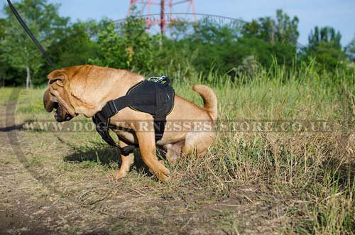 Harness for Shar Pei UK