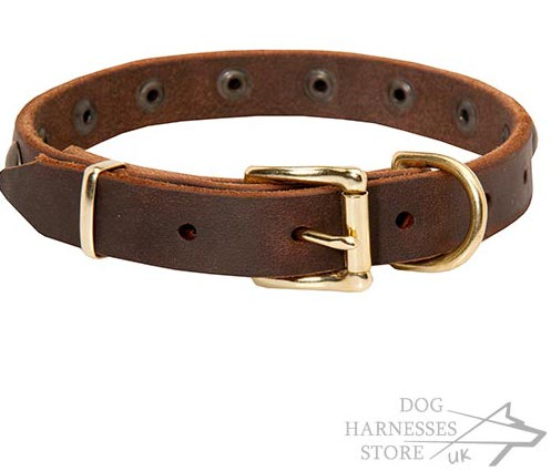 Small Dog Collar UK