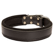 Padded Leather Dog Collar, Soft Felt Lined Safe Inside Area