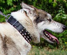 Spiked Leather Dog Collar for Husky, Fashionable Training