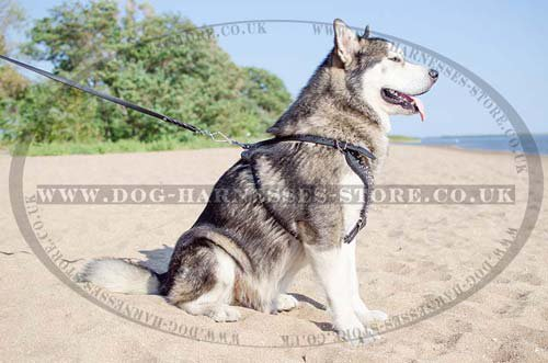 Malamute Harness UK