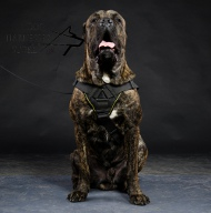 Cane Corso Harness of Nylon with Chest Plate for Walking, Sport