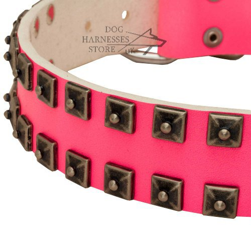 Female Dog Collar