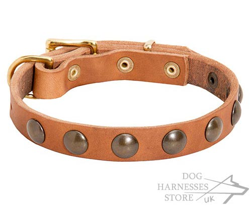 Small Dog Collars UK