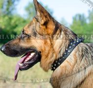 Studded Dog Collar with Nickel Pyramids for German Shepherd