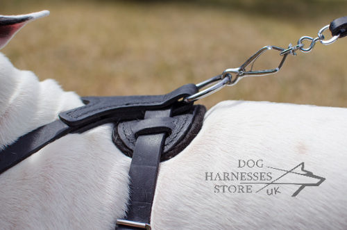 Bull Terrier Harnesses UK