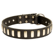 Stylish Dog Collar Leather with Row of Elegant Brass Plates