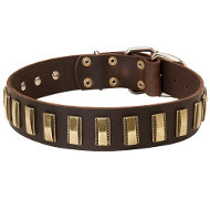 Trendy Dog Collar of Quality Leather with Brass Plates