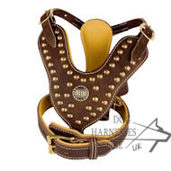 Studded Leather Dog Harness and Padded Collar - Set UK