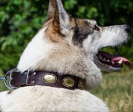 Leather Dog Collar in Vintage Style for Husky