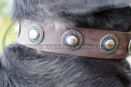 Vintage Dog Collar with Round Medals for Swiss Mountain Dog