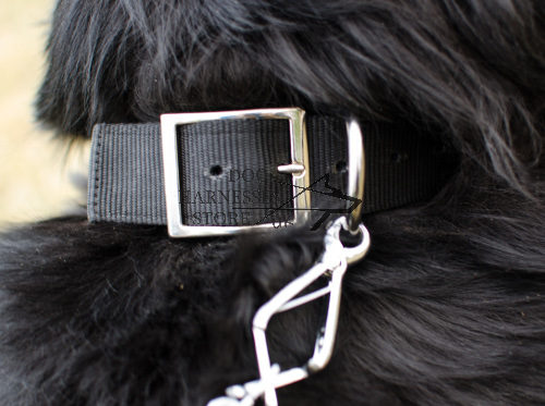Newfoundland Dog Collar UK