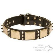Leather Dog Collar with Nickel Spikes and Large Brass Plates