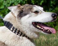 Wide Leather Dog Collar with 3 Rows of Nickel Pyramids for Husky