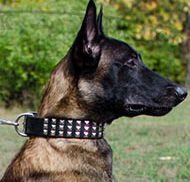 Wide Dog Collar 3 Rows of Nickel Pyramids for Belgian Malinois