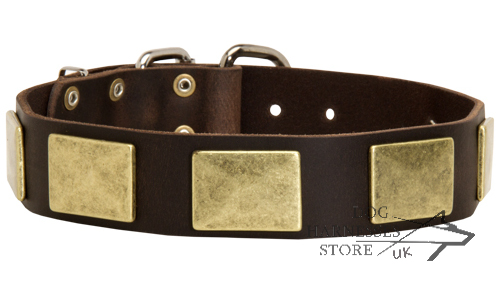 decorated Leather Collar UK