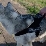 Nylon Dog Harness for Alaskan Malamute, Professional