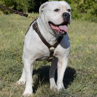 Lightweight Dog Harness of Leather for American Bulldog