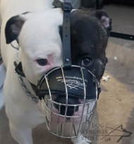 American Bulldog Muzzle for Walking and Training