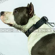 Leather Amstaff Collar with Large Ancient Style Nickel Plates