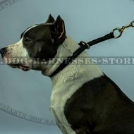 Amstaff Collar, Rolled Leather, Silent Safe Obedience Training