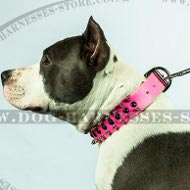 Girl Amstaff Collar of Pink Leather with Studs and Spikes Mix