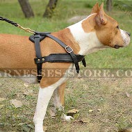 Dog Pulling Harness of Leather for Amstaff Tracking and Training