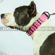 Amstaff Collar Female of Bright Pink Leather, Spikes and Studs