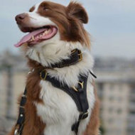 Australian Shepherd Dog Harness for Tracking, Training and Walks