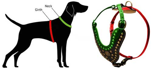 How to Measure Dog for Leather Harness