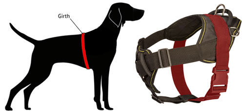 How to Measure Dog for Nylon Harness