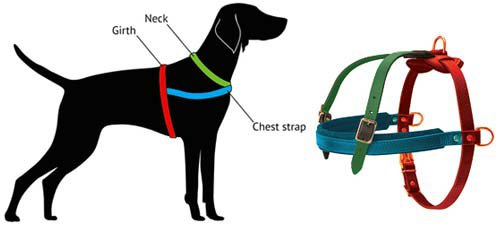 How to Measure Dog for Harness H5