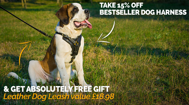 Best Harness for My Dog