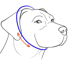 How to Size Show Dog Collar