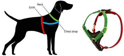 How to Measure Bulldog for Harness