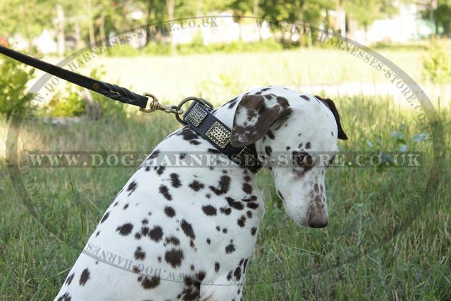 Leather Dog Leashes for Sale