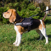 Reflective Beagle Dog Harness with ID Pathces