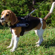 """Super Dog"" Beagle Training and Working Harness with Patches"