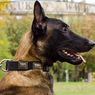 NEW Dog Collar with Plates for Belgian Malinois
